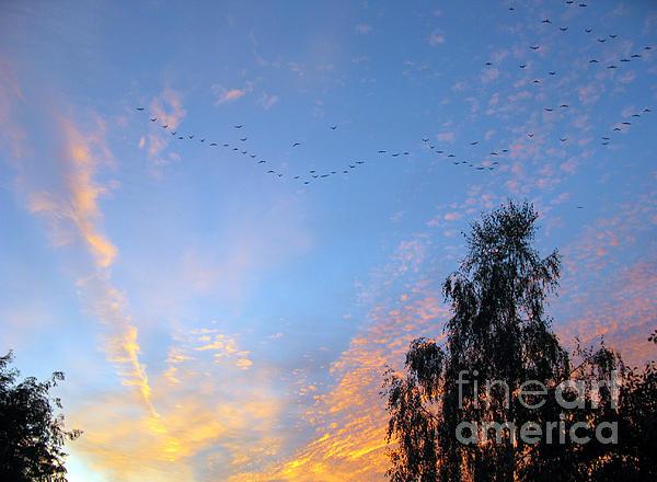 Flight Into The Sunset Print by Ausra Paulauskaite