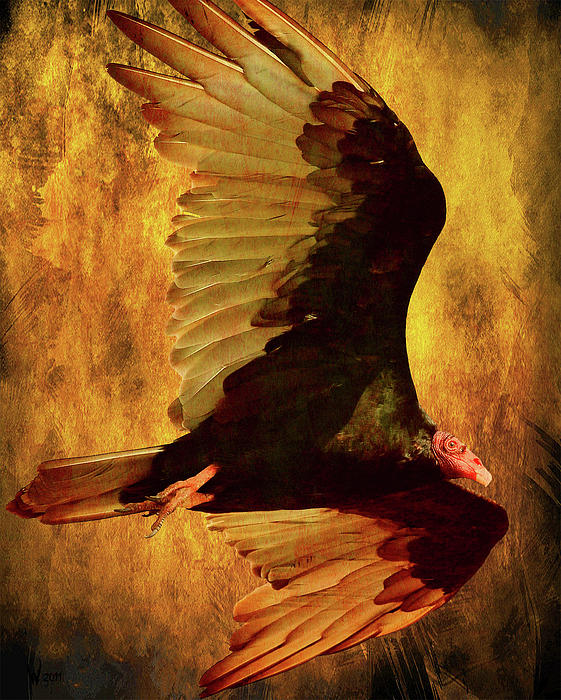 Flight Of A Vulture . Texture . 40d8879 Print by Wingsdomain Art and Photography
