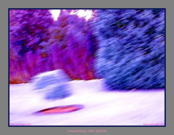 Floating Bush With Shadow  Print by Jane Tripp