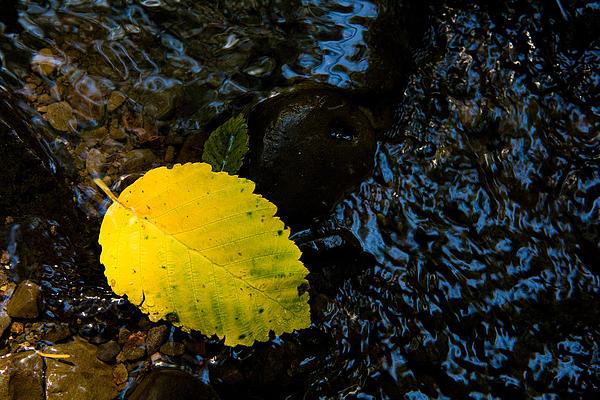 Floating Down The River Print by Sheri Van Wert