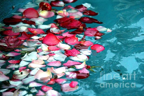 Yumi Johnson - Floating Rose petals