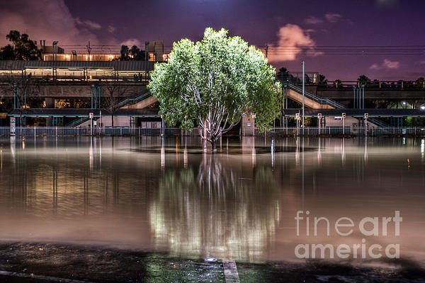 Flooded Tree Print by Sonny Marcyan