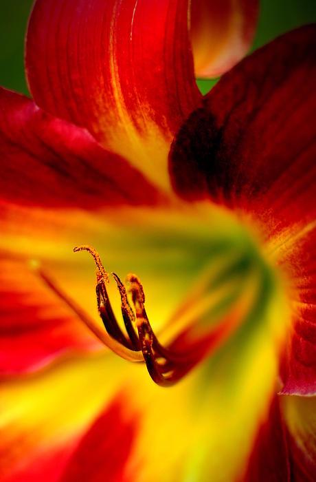Floyd Menezes - Floral Macro of a Blossom