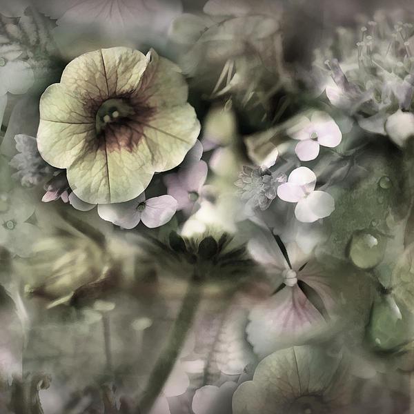Floral Montage Print by Bonnie Bruno