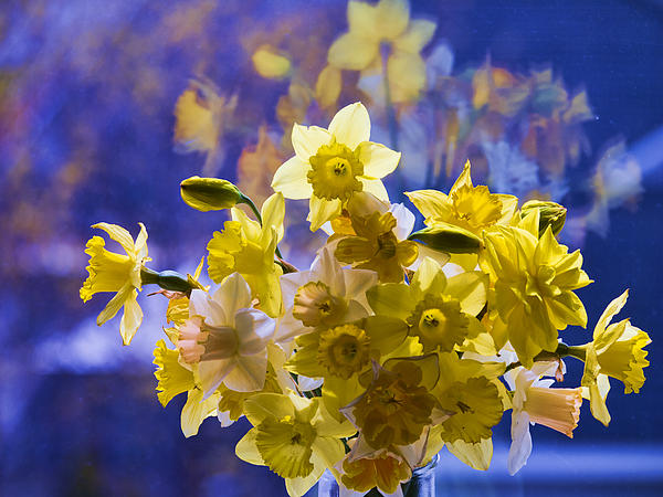 Floral Reflections Print by Jo-Anne Gazo-McKim