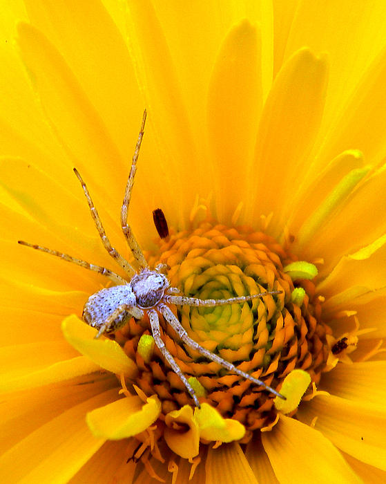 Floral Spider Print by Mark J Seefeldt