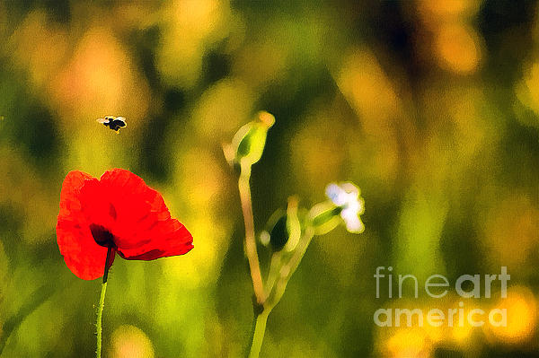 Flower And Bee Print by Odon Czintos