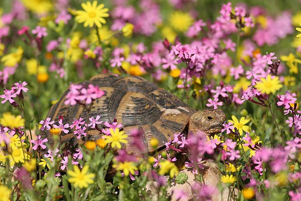 flowering Around turtle Print by Alon Meir