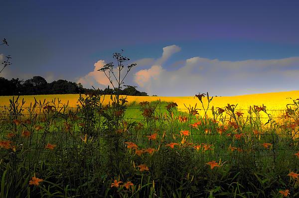 Randall Branham - Flowers and fields