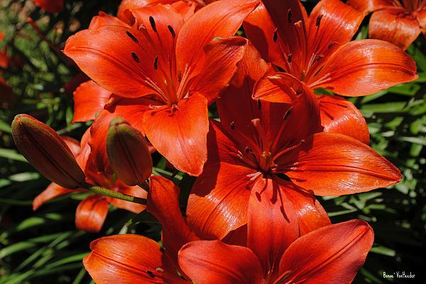 Bonae VonHeeder - Flowers