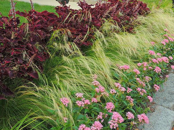 Marcia Lee Jones - Flowers  Grass