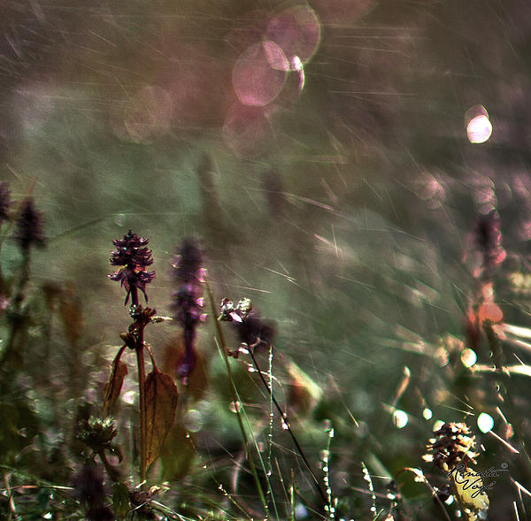 Flowers Print by Renata Vogl