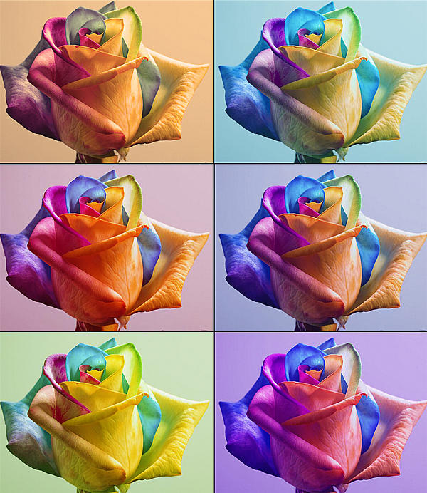 Yosi Cupano - Flowers