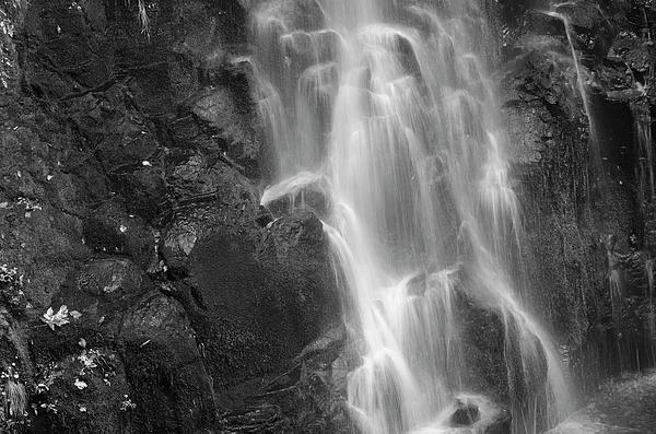 Flowing Water Print by Loree Johnson