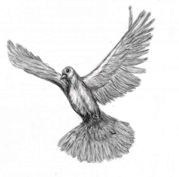flying dove pencil drawing -#main
