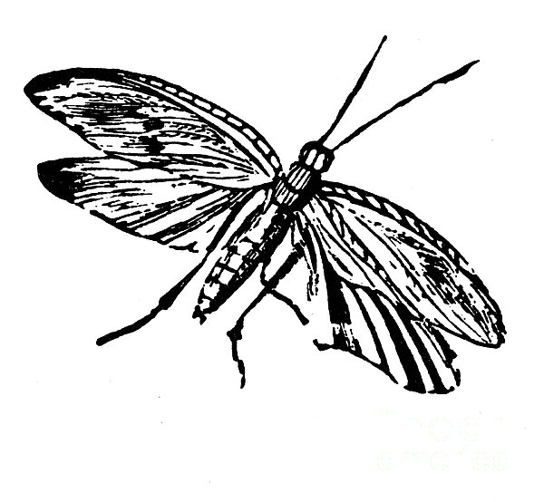 Flying Insect Print by Granger