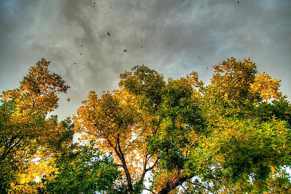 Flying Leaves Print by Stephen  Johnson
