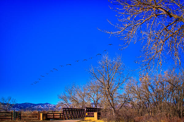 Flying Over South Platte Park Print by David Patterson