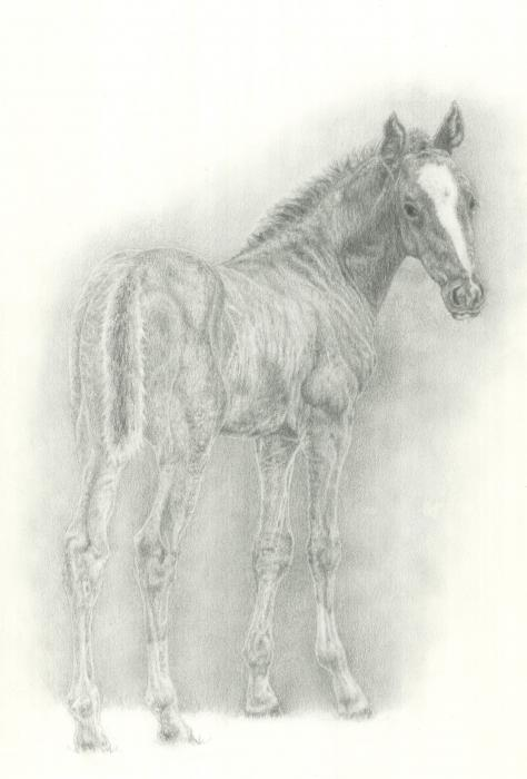Foal Print by Jennifer Nilsson