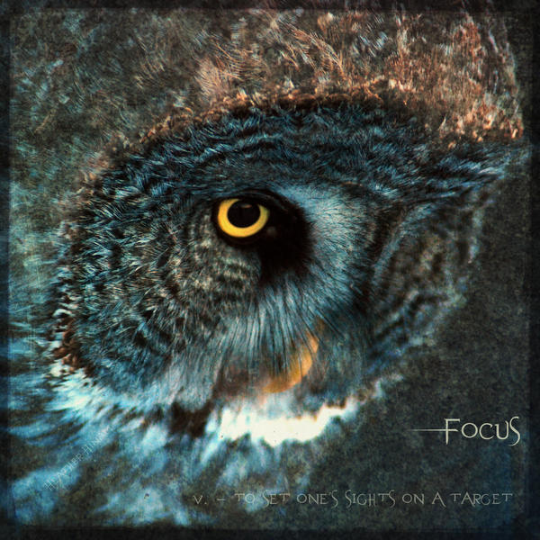 Heather Hinam - Focus