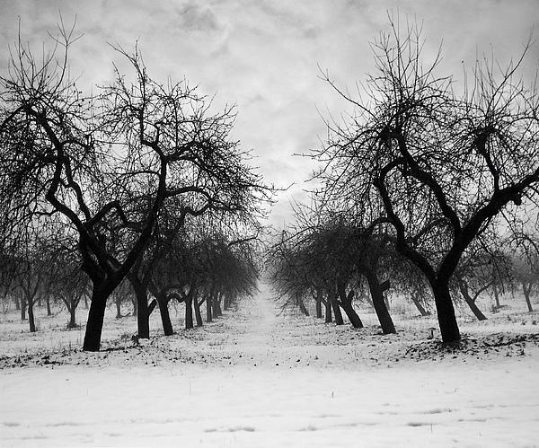 Evija Freidenfelde - Fog Ghosts