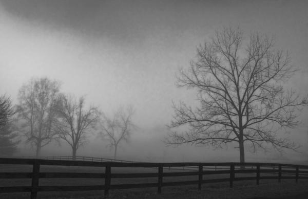 Ingrid Oliphant - Fog in Hitch Hollow