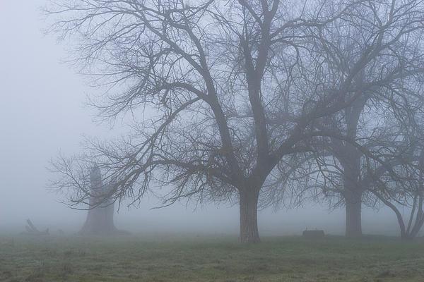 Foggy Morning Print by Randy Bayne
