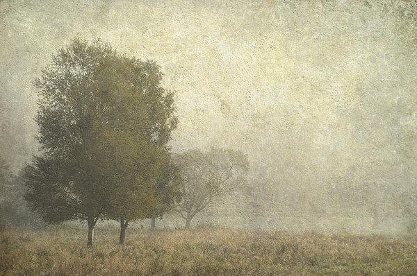 Foggy Morning. Trossachs National Park. Scotland Print by Jenny Rainbow