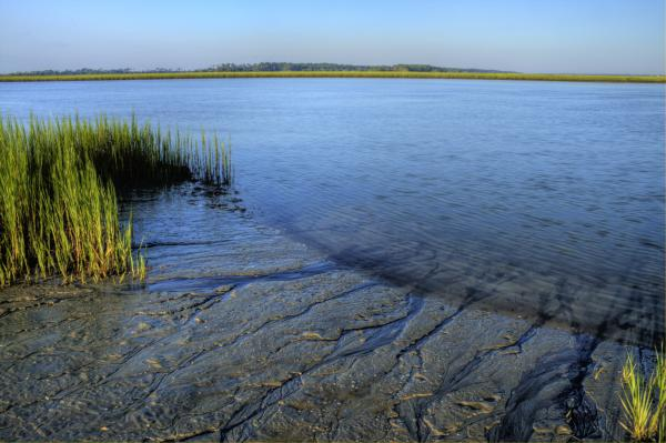 Folly Beach Marsh  Photograph
