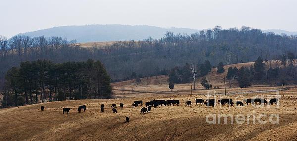 Barbara McMahon - Foothills of West Virginia
