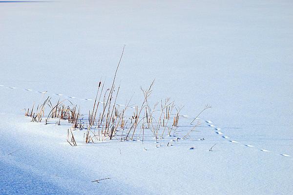 Footprints On Snow Print by Paul Ge