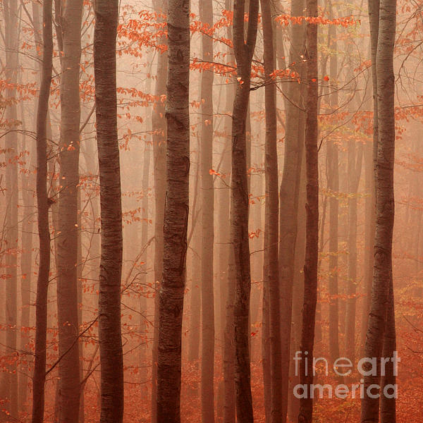 Forest Barcode Print by Evgeni Dinev