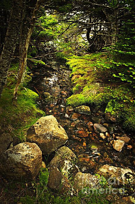 Forest Creek Print by Elena Elisseeva