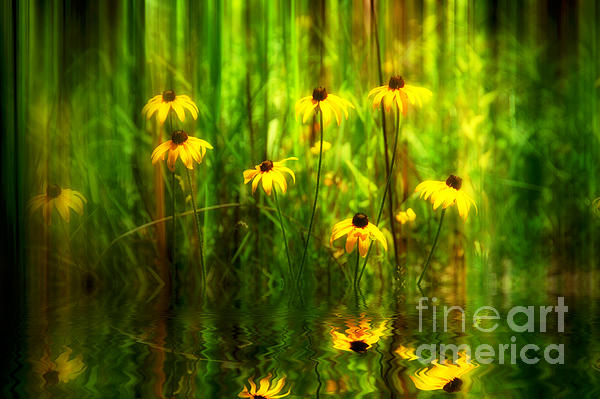 Forest Edge Print by Elaine Manley