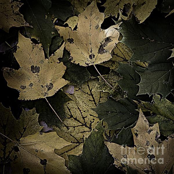 Forest Floor - Leaf 13 Print by Pete Hellmann