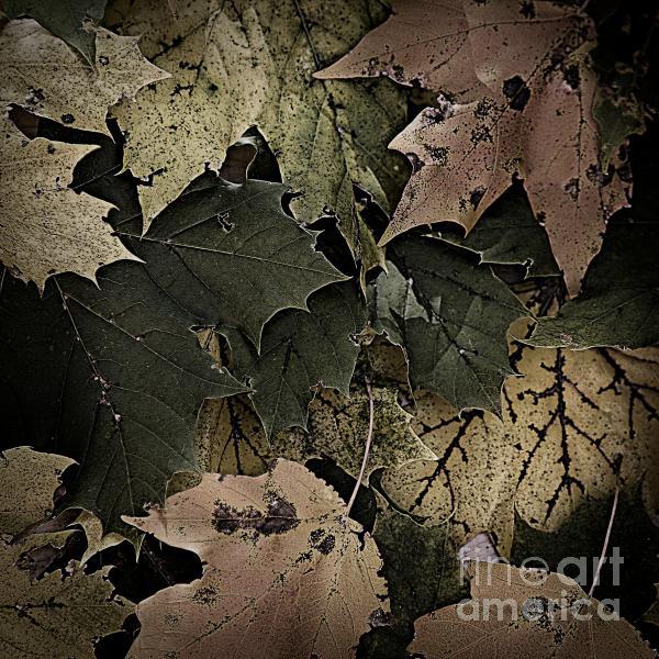 Forest Floor - Leaf 14 Print by Pete Hellmann
