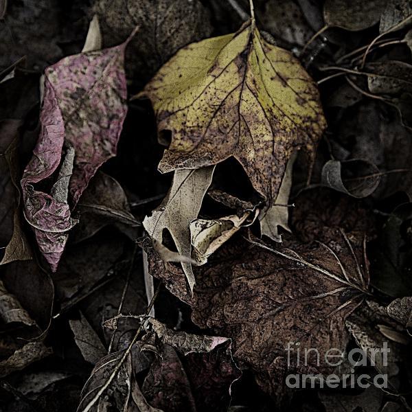 Forest Floor - Leaf 9 Print by Pete Hellmann