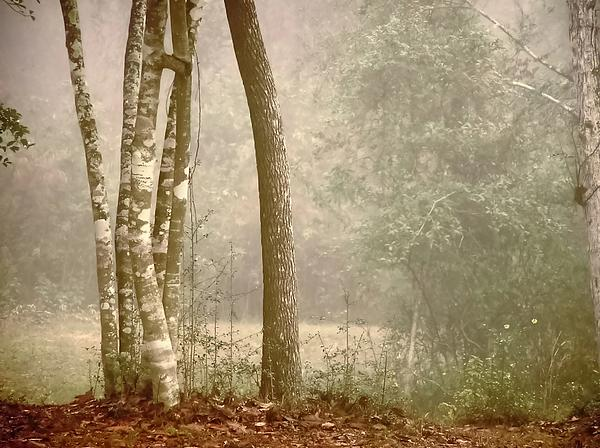 Forest In Fog Print by Robert Brown