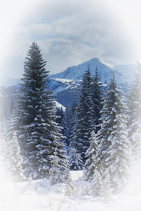 Forest In The Winter Print by Carson Ganci