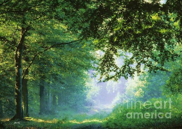 John Kershaw - Forest