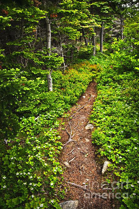 Forest Path In Newfoundland Print by Elena Elisseeva