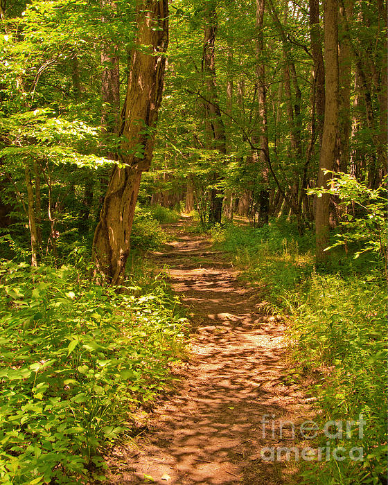 Bob and Nancy Kendrick - Forest Trail - Canvas