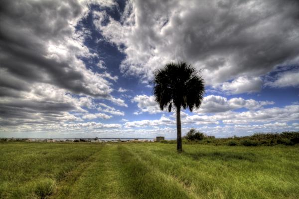 Fort Moultrie Palm  Print by Dustin K Ryan