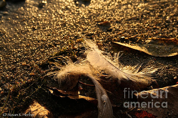 Found Feathers Print by Susan Herber