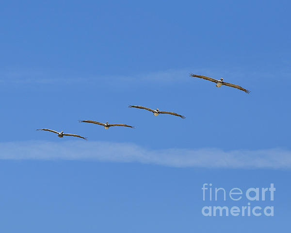 Four Flyers Print by Al Powell Photography USA