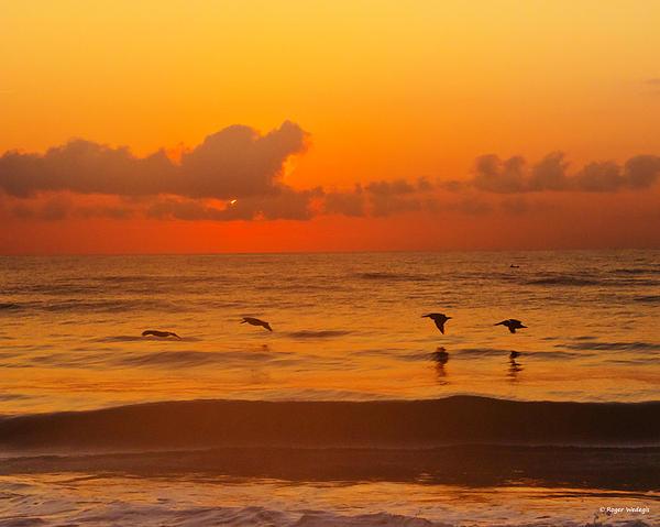 Roger Wedegis - Four Pelican Sunrise
