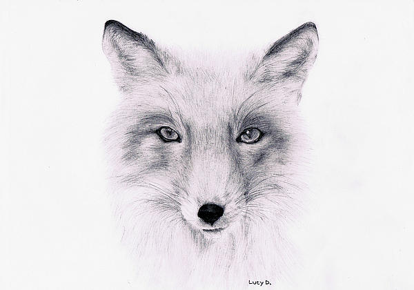 Fox Print by Lucy D