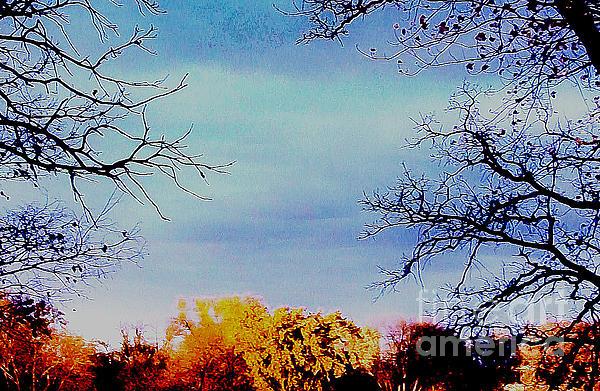 Framed Fall Trees Print by Marsha Heiken