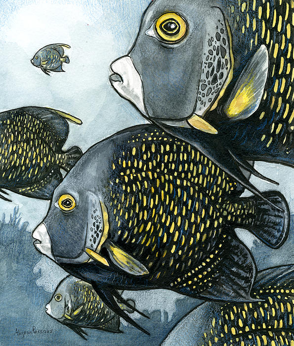 Alyssa Parsons - French Angelfish