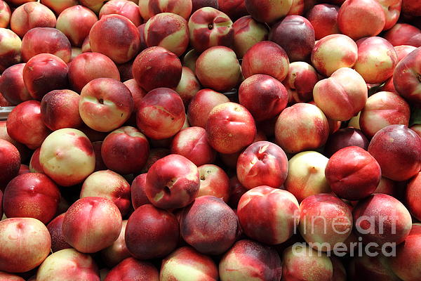 Fresh Nectarines - 5d17813 Print by Wingsdomain Art and Photography